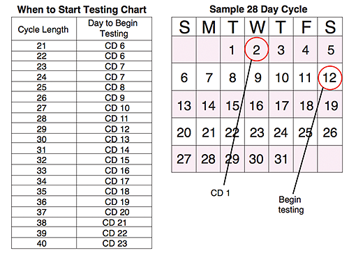 Ovulation Test Cycle Chart